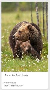 Bears_AmberAlvarez_Pinterest