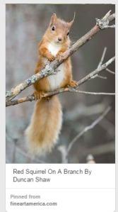 squirrel_AmberAlvarez_Pinterest